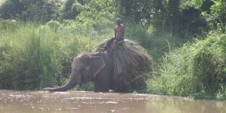 Elephants, Rhinos & monsoon rain…