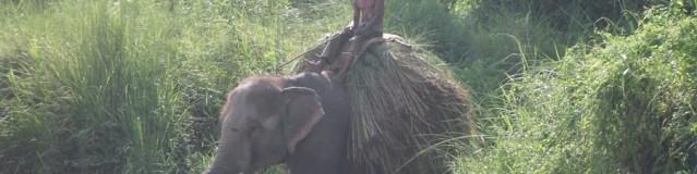 Elephants, Rhinos & monsoon rain…